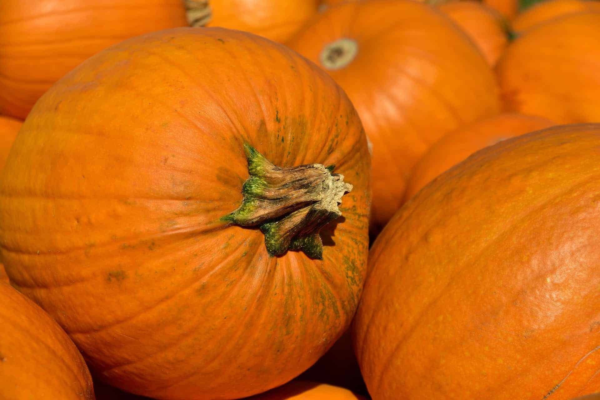 The Best Fall Events in Franklin, TN