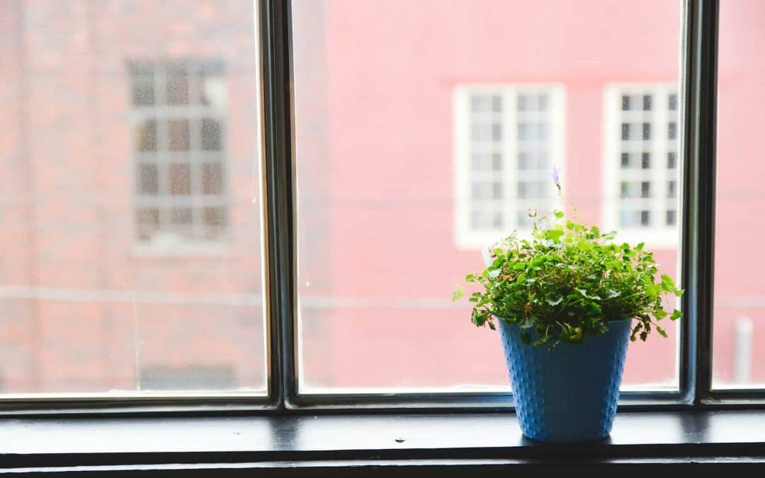 9 Indoor House Plants for Better Health